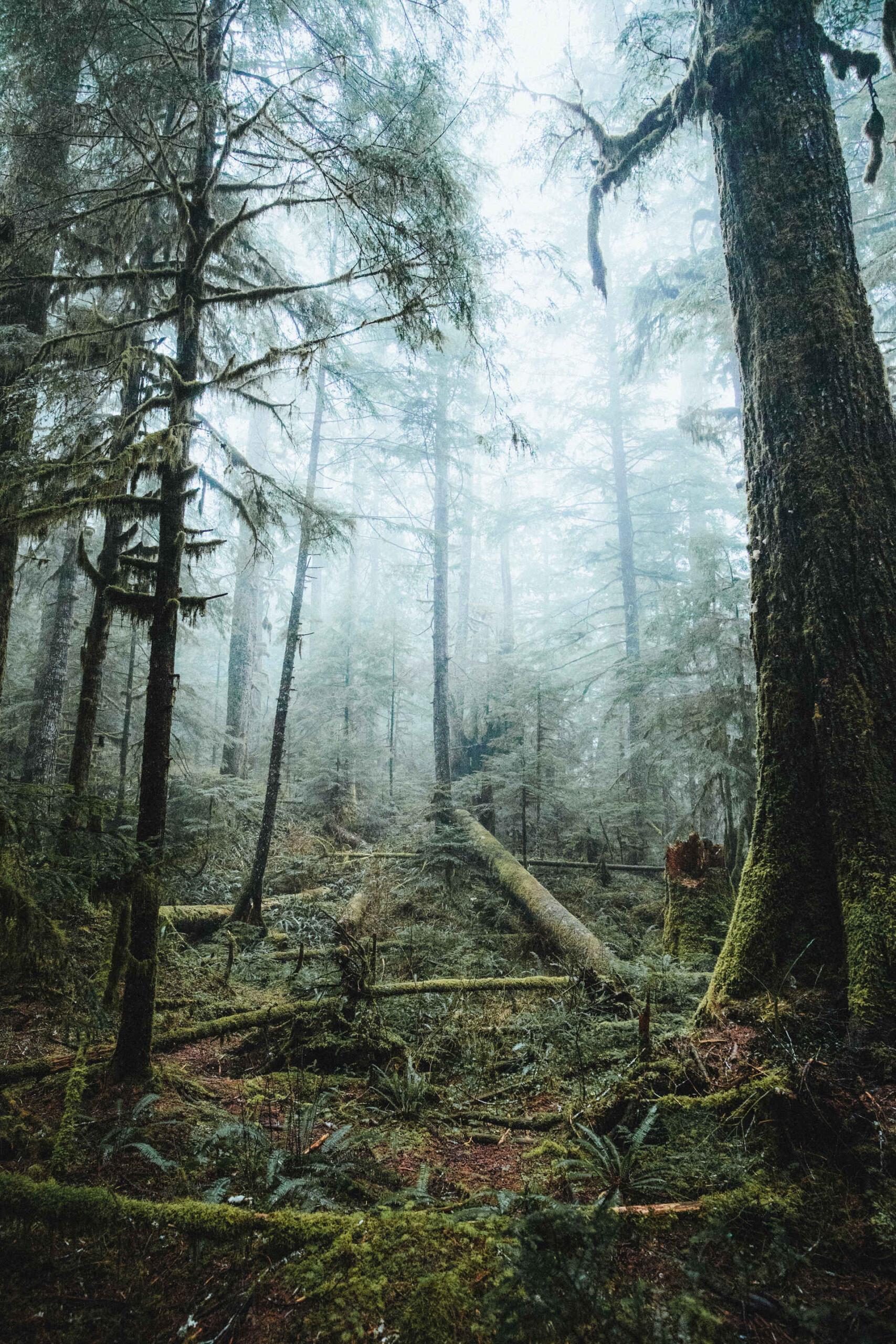 Nie dla lasów jakobiomasy