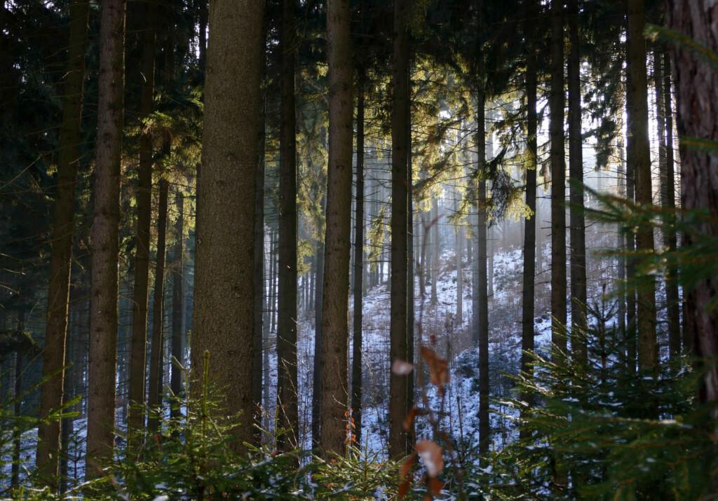 Decydujemy jaki będzie las